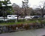 070331sakura.JPG