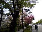 070417sakura2.jpg
